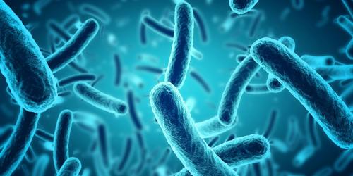 microbes-websiteheader-1000x500.jpg